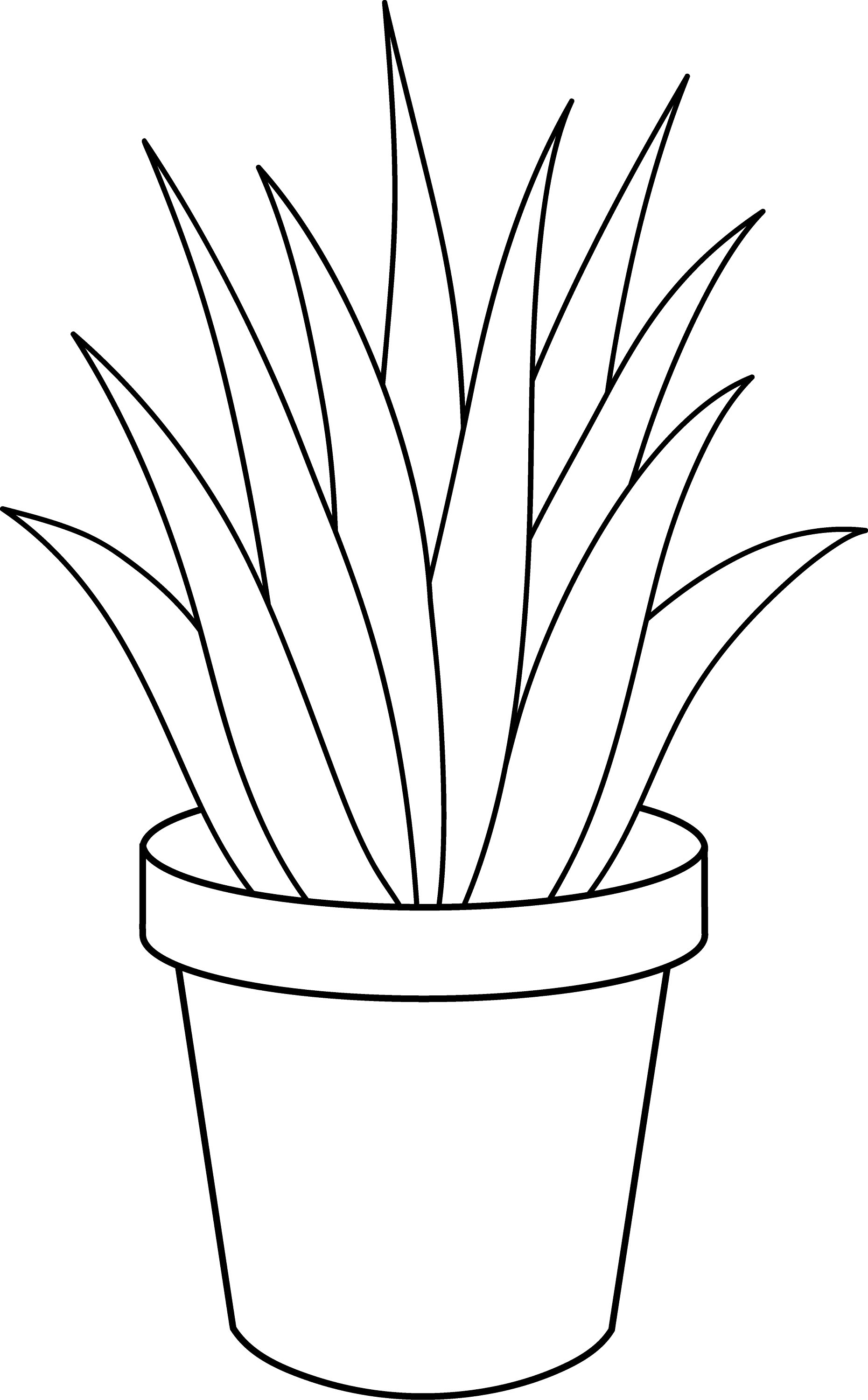 Line Drawing Plants : Aloe vera plant line art free clip