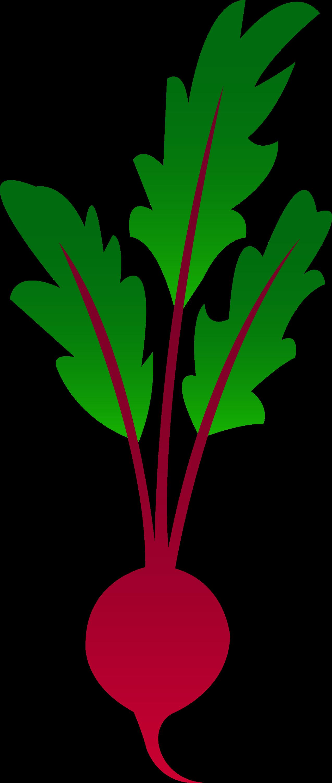 Red Garden Beet Free Clip Art
