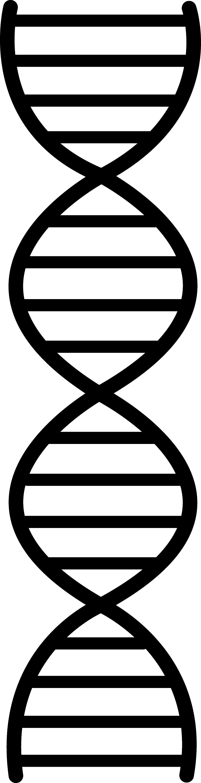 Simple dna strand clip art
