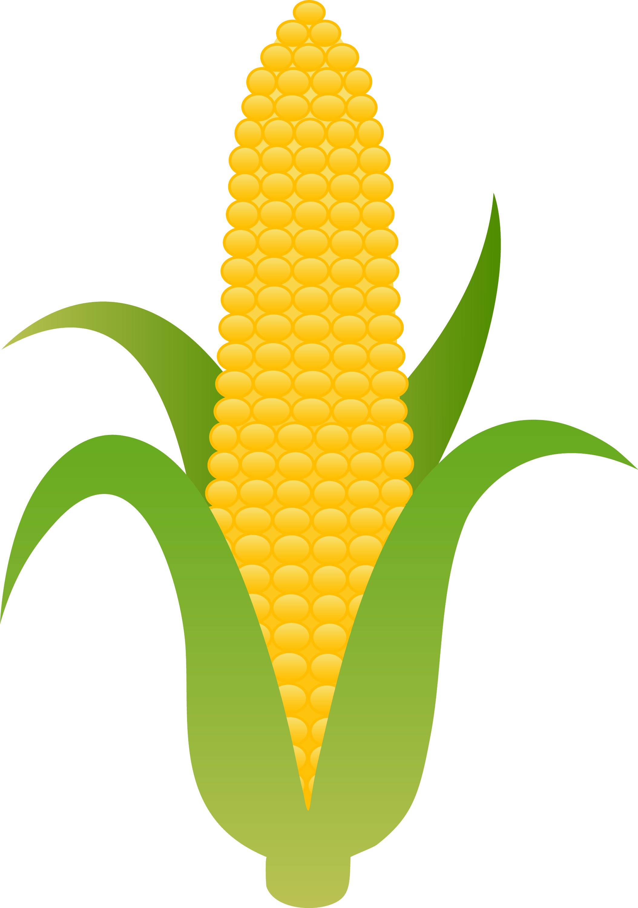 Ear of Yellow Corn  Free Clip Art