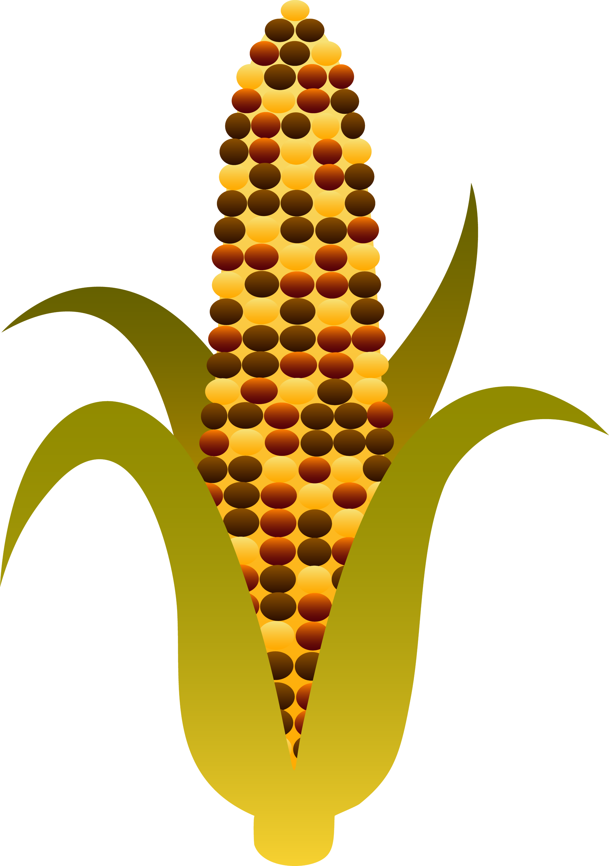 indian harvest corn maize free clip art rh sweetclipart com Candy Corn Corn Stalk Clip Art