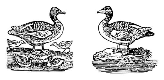Mother Goose Melodies Goosey Gander