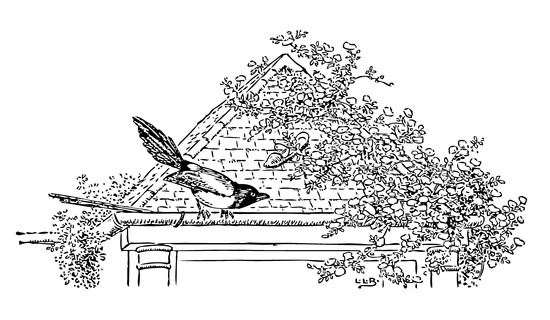 1922 Brooke Bird on Roof