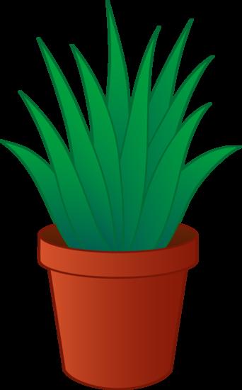 Aloe Vera Plant in Pot