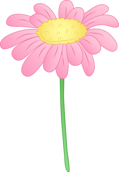 Pretty Pink Daisy Flower
