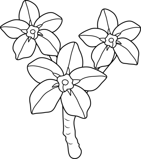 Forget Me Nots Coloring Page