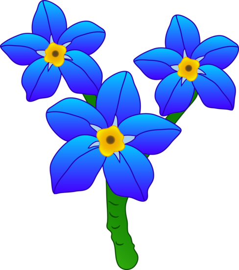 Three Forget Me Not Flowers