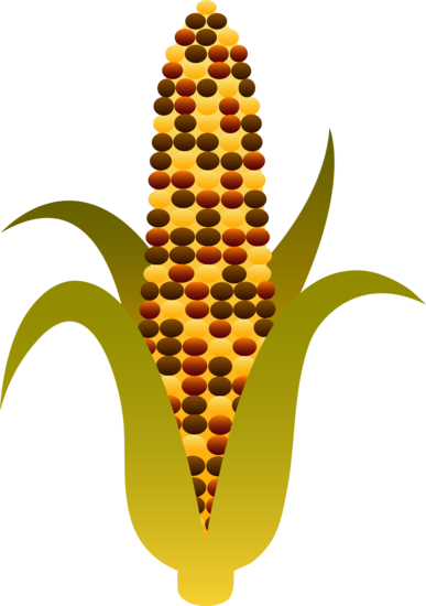 ... - Corn Stalk Art Http Sweetclipart Com Indian Harvest Corn Maize 375