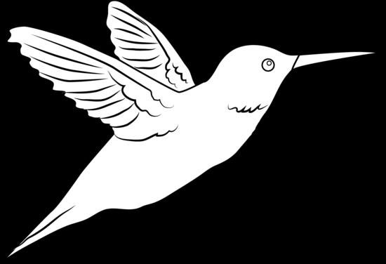 Line Drawing Hummingbird : Hummingbird coloring page free clip art