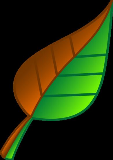 Multicolored Leaf Vector Art