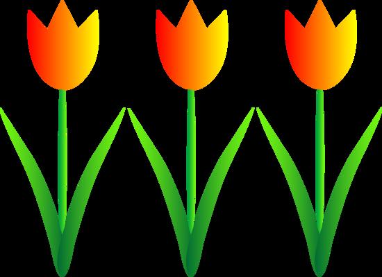 Orange and Yellow Spring Tulips
