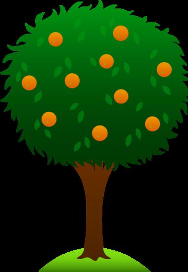 Sweet Orange Tree