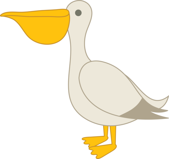 Pelican Illustration