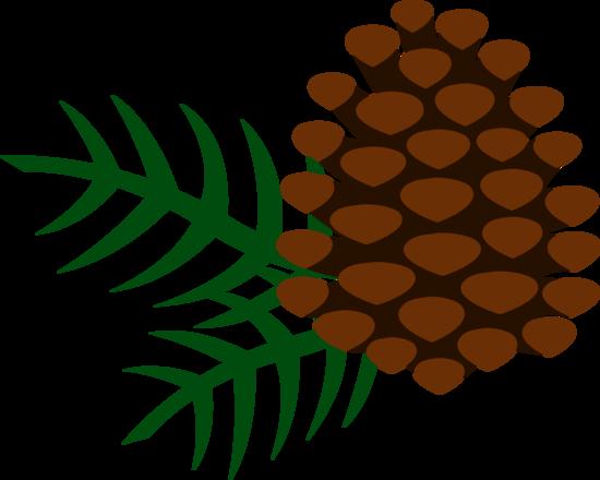 Pinecone and Pine Needles