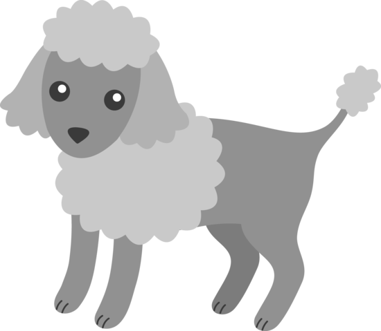 Fluffy Grey Poodle Puppy