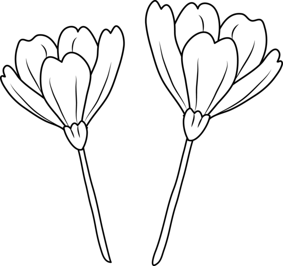 Poppy flowers coloring page free clip art poppy flowers coloring page mightylinksfo