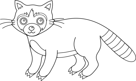 Line Drawing Raccoon : Colorable raccoon free clip art