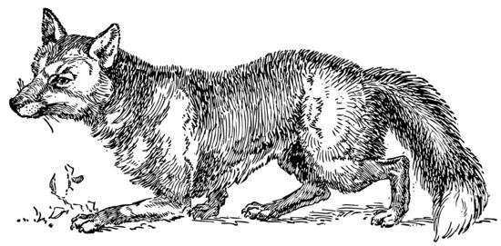 Sly Fox Vintage Clip Art
