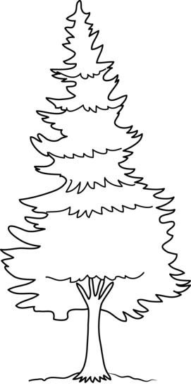Pine Tree Coloring Page Free