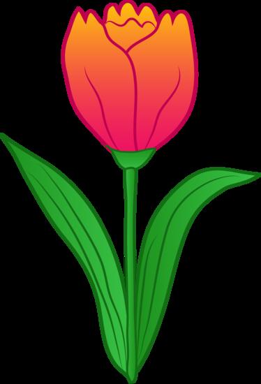 Pretty Pink Tulip Flower