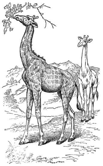 Two Giraffes Vintage Clip Art