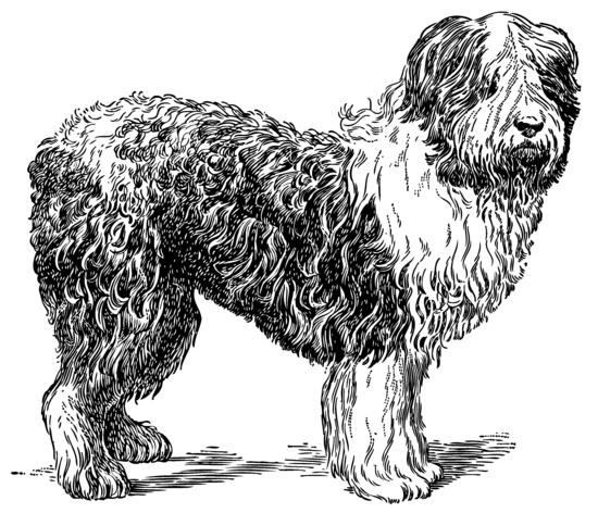 Vintage Sheepdog Clip Art