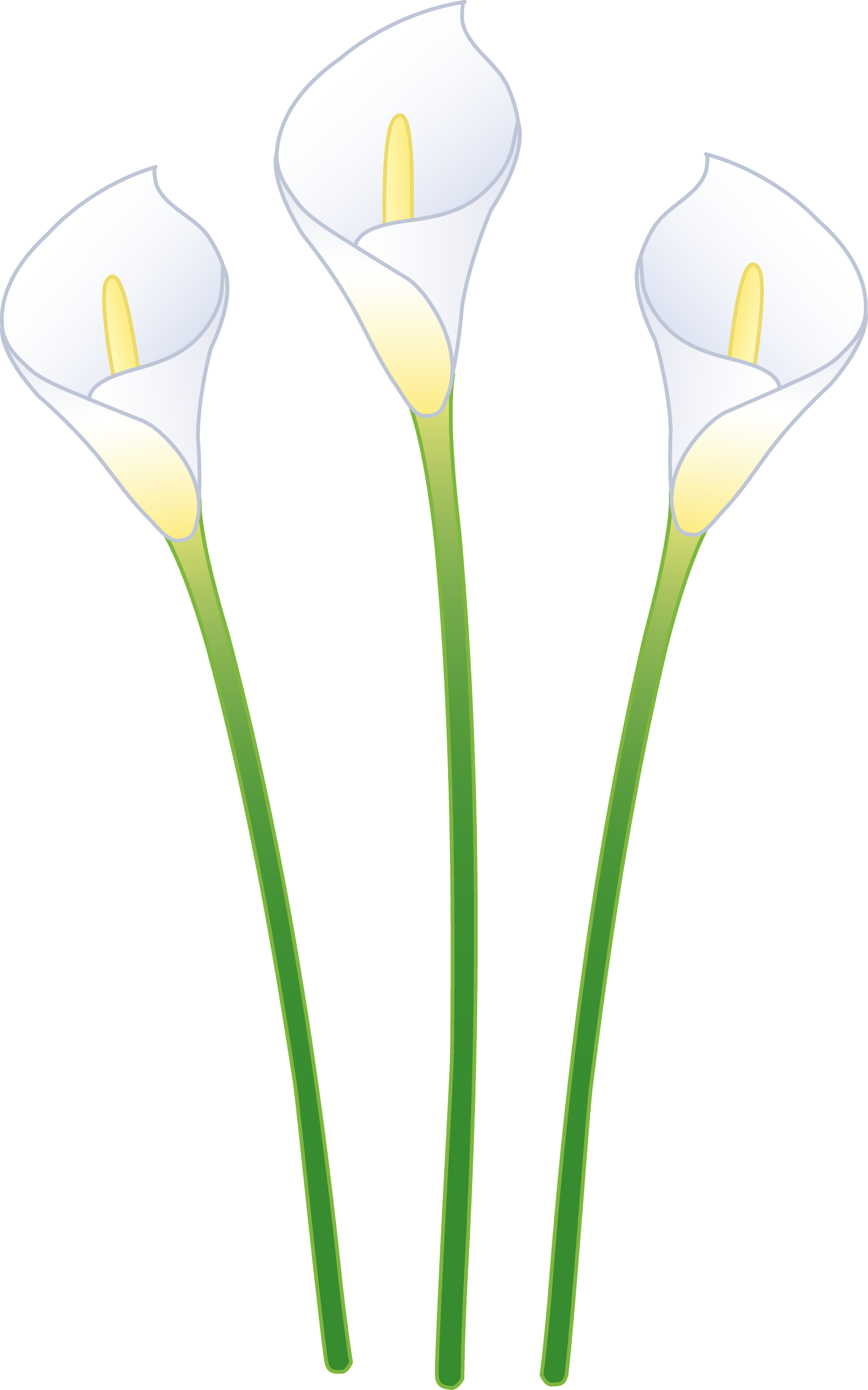 Flowers Photos » calla lilly flower clip art