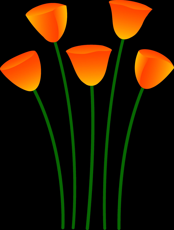 Orange Poppy Flowers