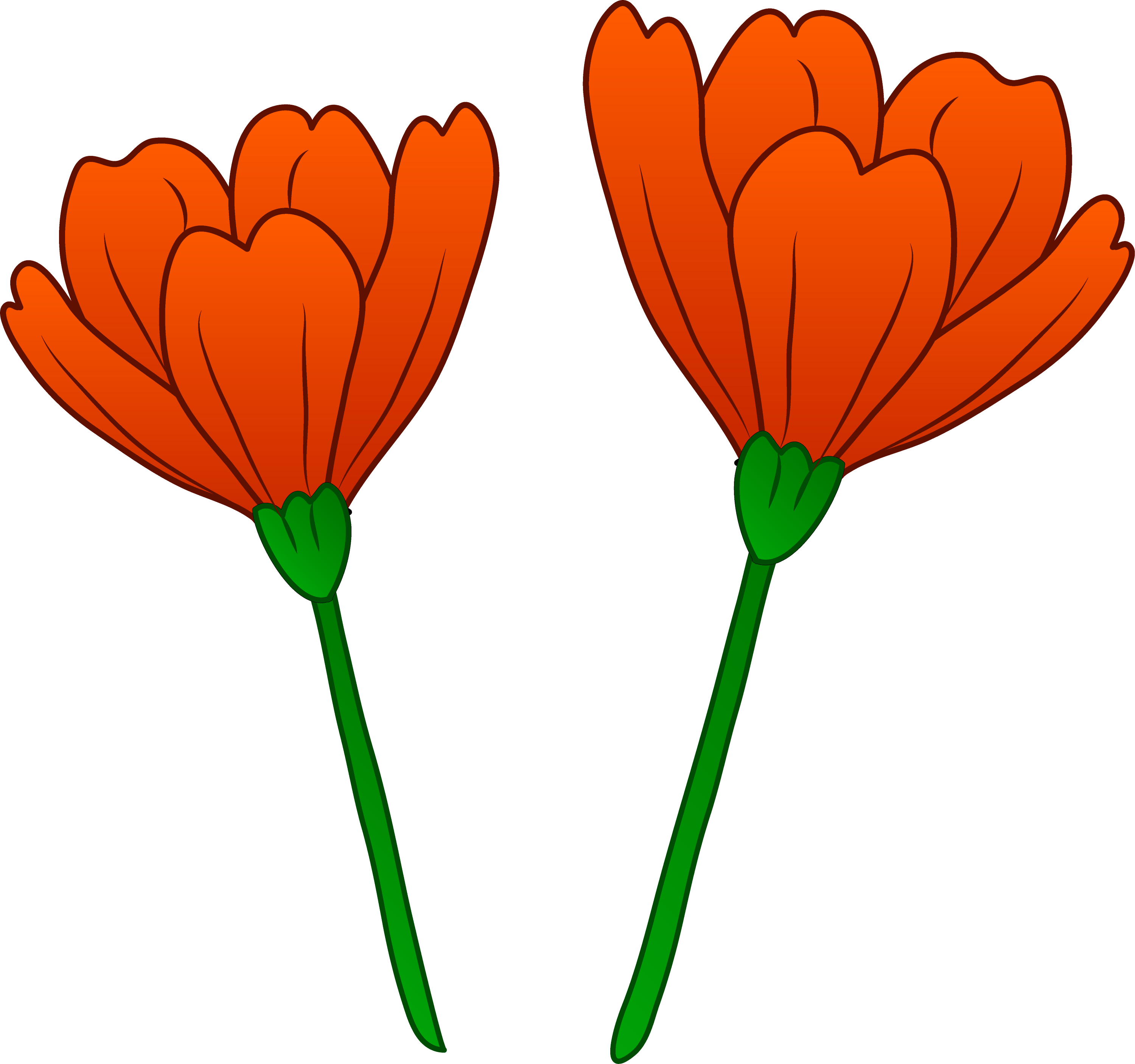 Two Pretty Red Poppies Free Clip Art