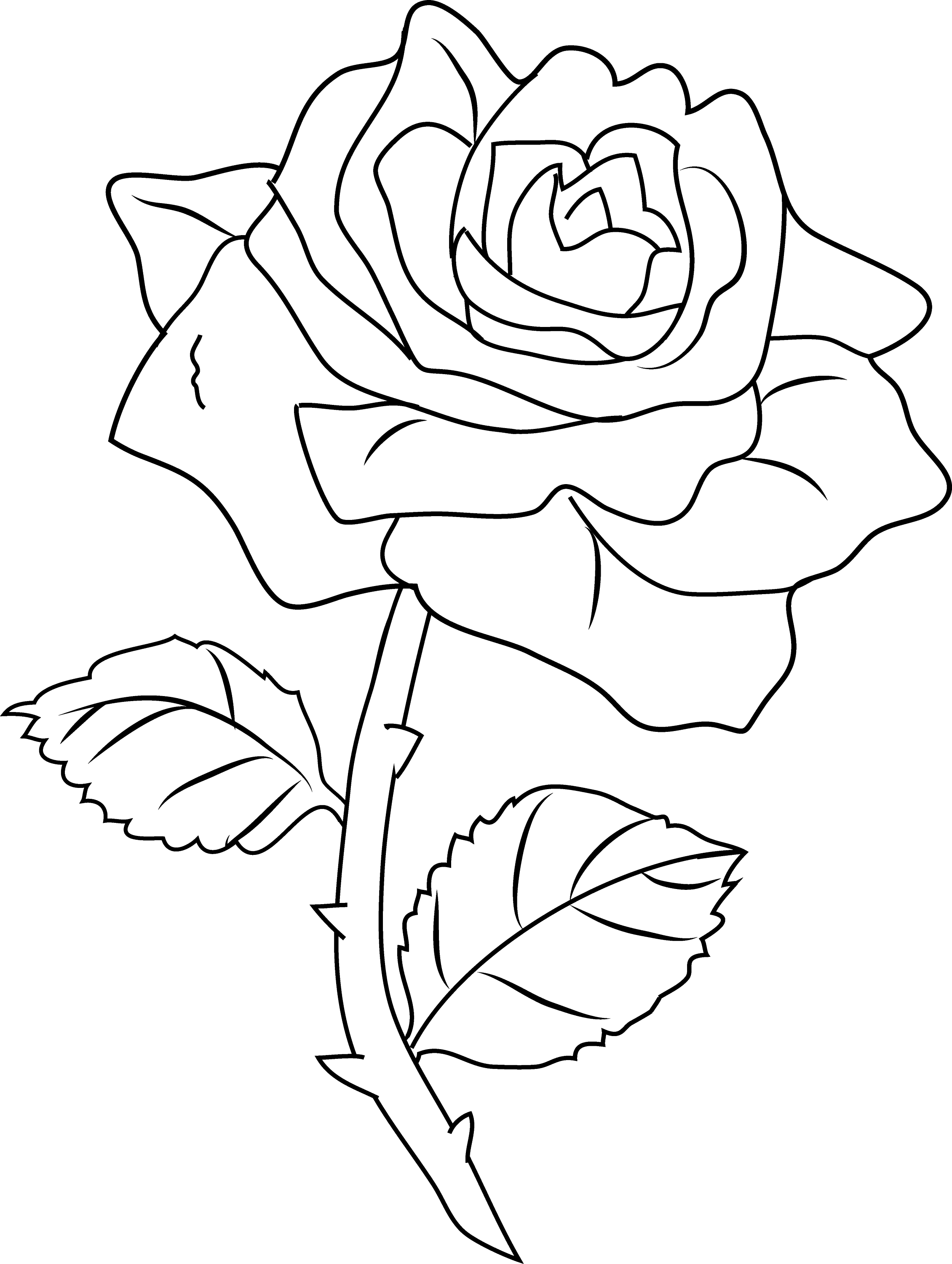 Line Art Rose : Knumathise rose black and white outline images