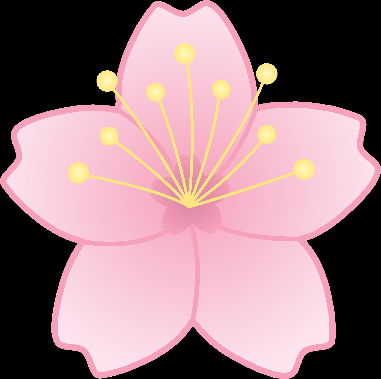 Pink Cherry Blossom Flower Free Clip Art