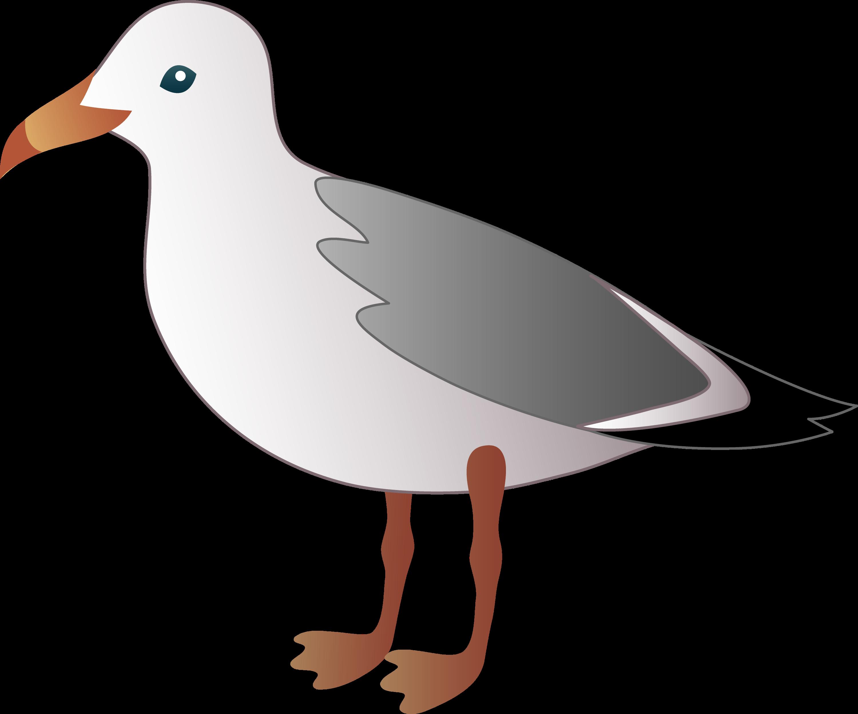 little seagull free clip art