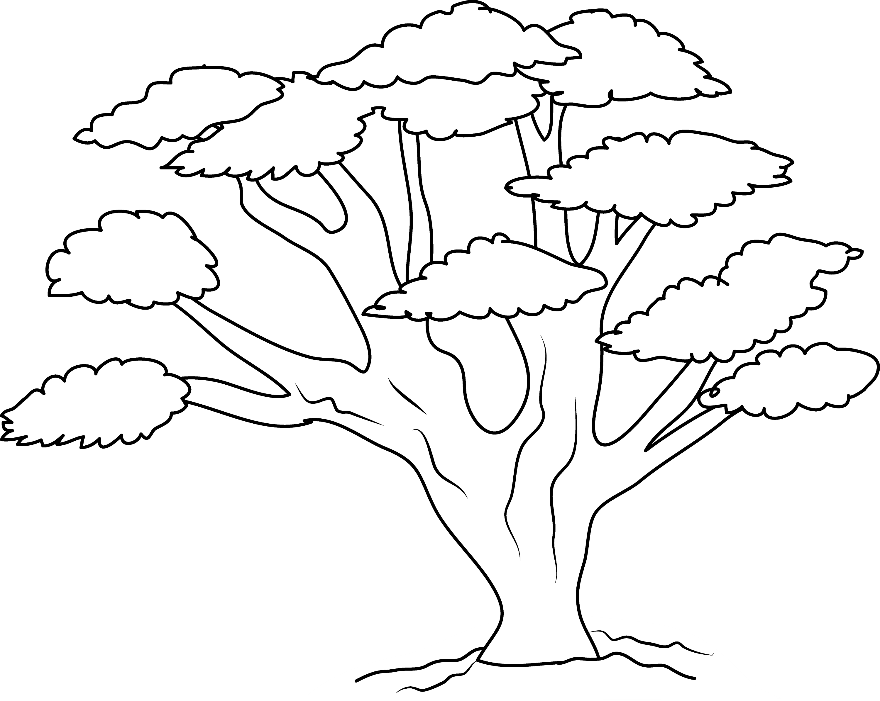 Oak Tree Coloring Page Free Clip Art Big Tree Coloring Page