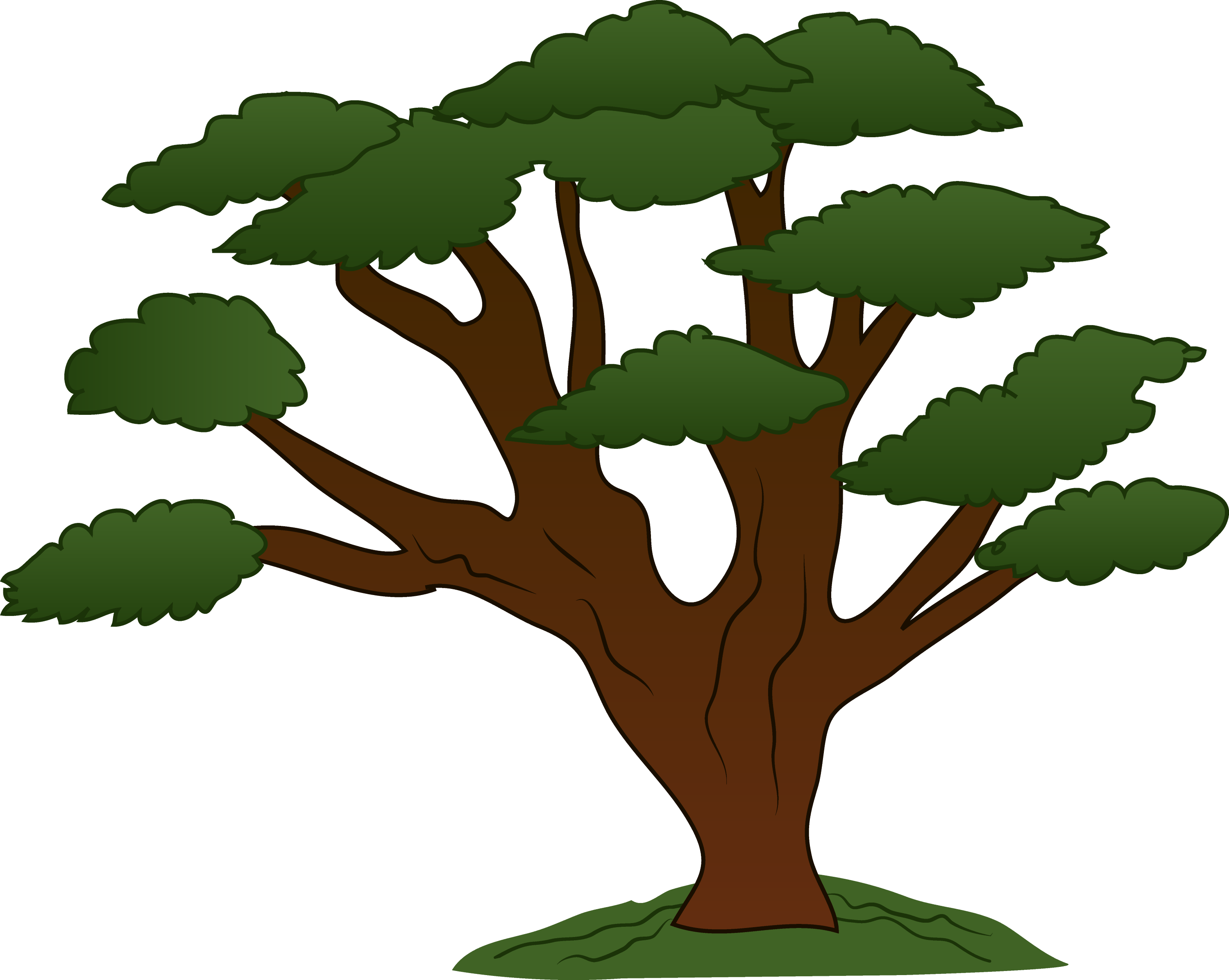 Oak Tree Cartoon