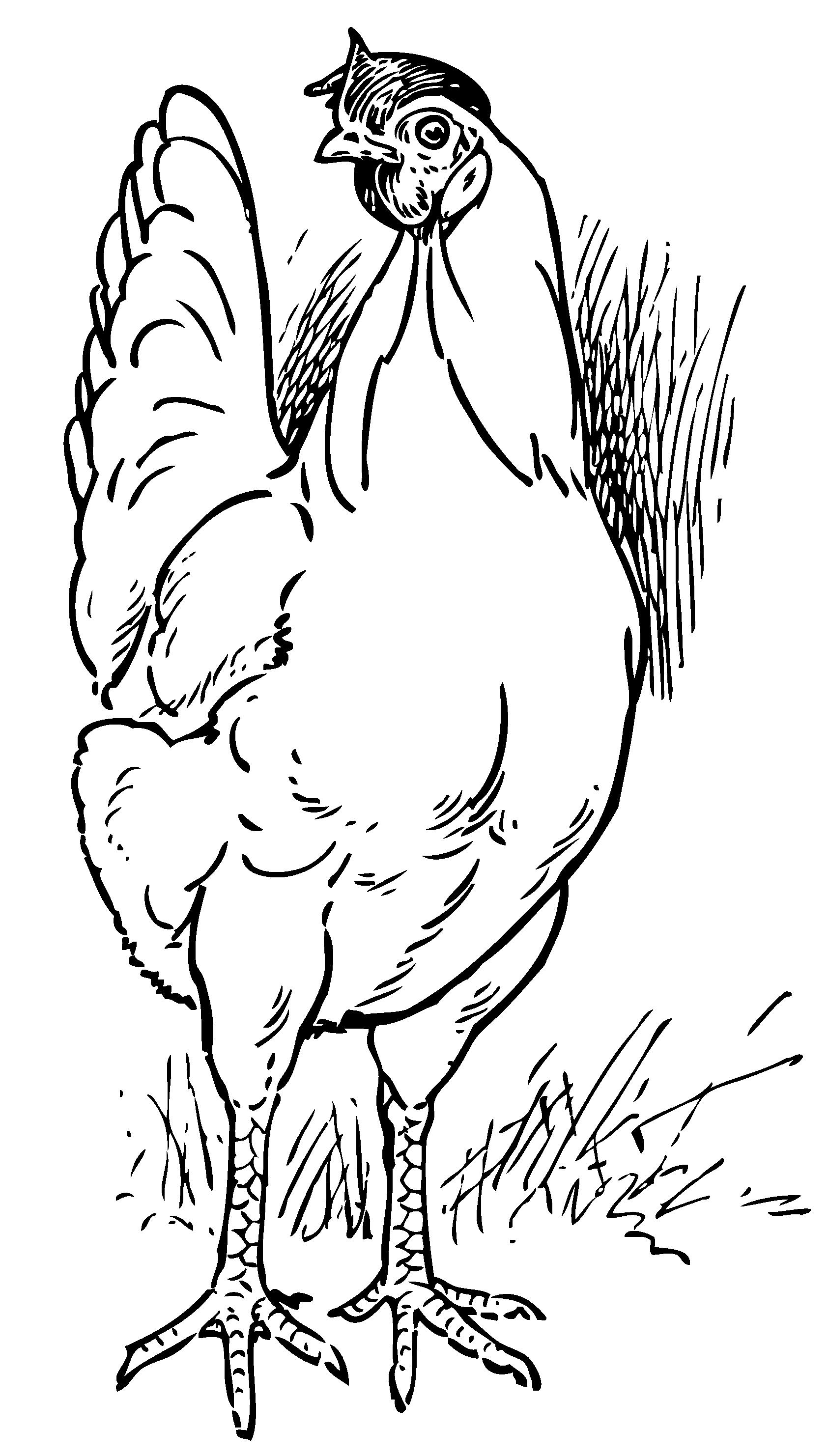 hen coloring page. Vintage Hen Coloring Page  Free Clip Art